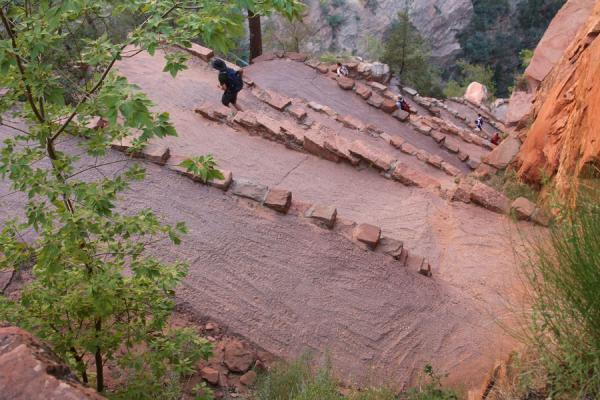 Picture of Zion National Park (U.S.A.): Zigzagging its way up towards Scout Lookout
