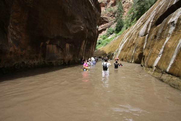 People wading through Virgin River Canyon north of the Temple of  Sinawava | Zion National Park | U.S.A.