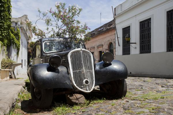Antique car with vegetation growing out of it in one of the cobble stoned streets in Colonia - 乌拉圭 - 北美洲