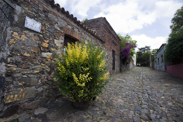 Picture of Calle de Solís with old houses and cobble stoned streetColonia - Uruguay