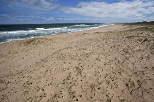 Picture of Sandy beach near La PedreraLa Pedrera - Uruguay