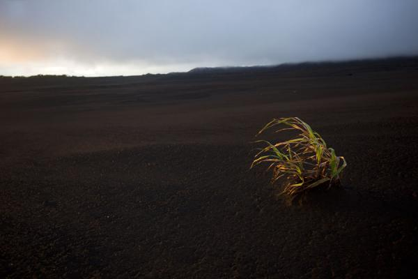 Foto van Lone plant on the desert-like landscape of the ash plainAmbrym - St Vincent en de Grenadines