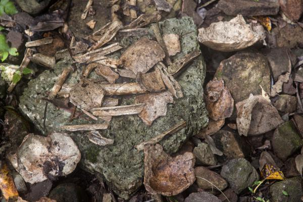 Picture of Lawor cannibal site (Vanuatu): The leftovers of cannibal meals: human bones and skulls