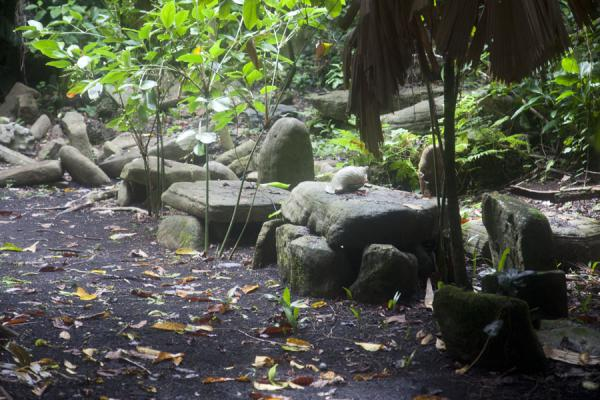 Picture of Lawor cannibal site (Vanuatu): The ceremonial site with family stones is where various communal events took place