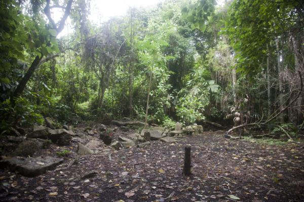 Picture of Lawor cannibal site (Vanuatu): The communal area, or nasala, of Lawor, where various events took place