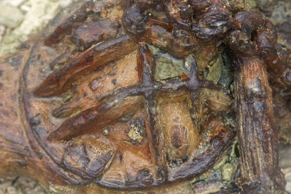 Picture of Million Dollar Point (Vanuatu): Close-up of one of the many objects rusting at Million Dollar Point