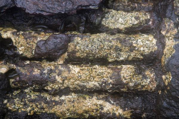 Picture of Million Dollar Point (Vanuatu): Detail of one of the many rusty objects decaying at Million Dollar Point