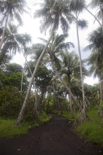 Picture of Port Resolution (Vanuatu): Black ash track leading to Port Resolution