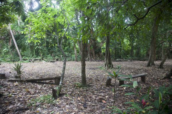 Picture of Wala Island (Vanuatu): Open space on Wala island, the nasala, where ceremonies are performed