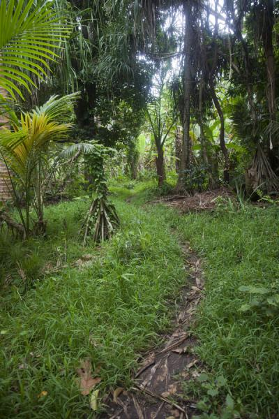 Foto van Trail leading over Wala IslandWala - St Vincent en de Grenadines