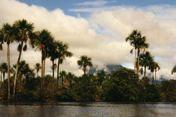 Trees and mountains seen from a river | Angel watervallen | Venezuela
