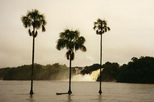 Waterfall and trees in a river in Canaima National Park安吉似瀑布 - 委内瑞拉