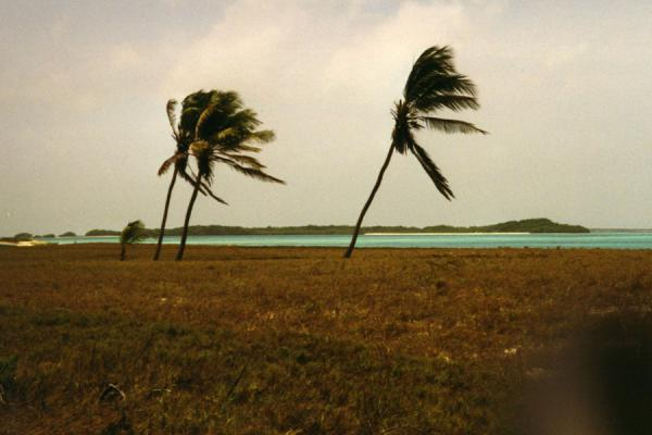 Foto van Palmtrees sturggling against the elementsLos Roques - Venezuela