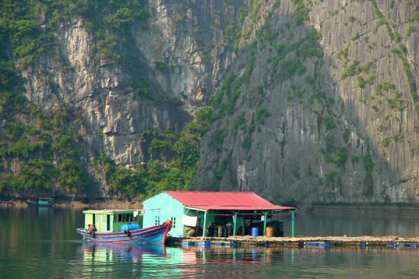 Picture of Halong Bay (Vietnam): House on the sea in Halong Bay