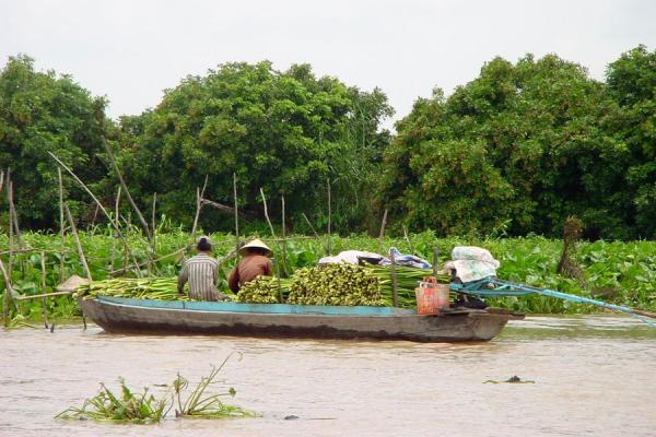 Foto di On their way to a (floating?) marketFiume Mekong - Vietnam