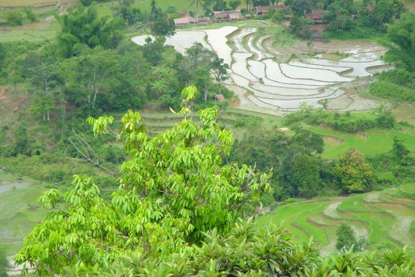 Foto di Ricefields from aboveCampana di riso - Vietnam