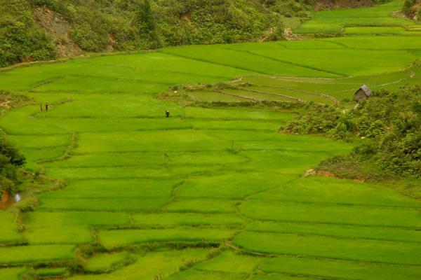 Foto di Ricefields in the Central HighlandsCampana di riso - Vietnam