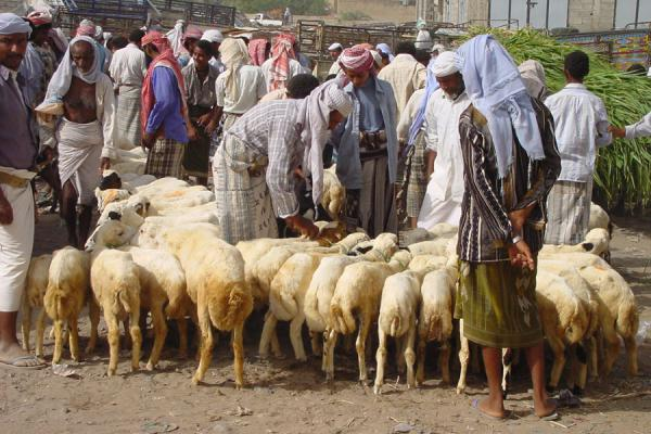 Picture of Bait al Faqih (Yemen): Animal market of Bait al Faqih