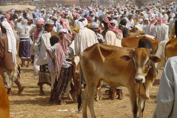 Photo de Cow marketBait al Faqih - Yémen