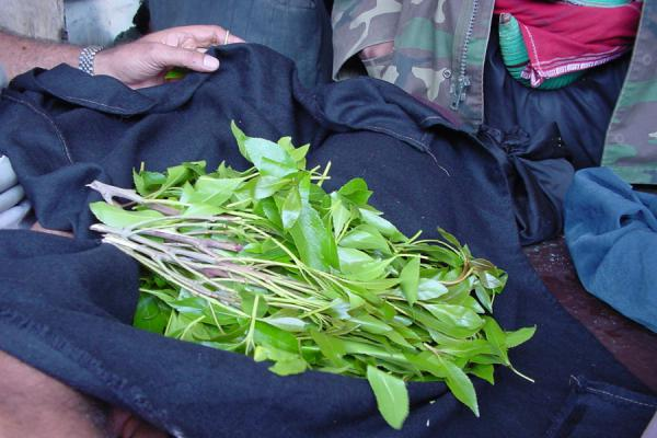 Foto di Qat leaves in a clothQat - Yemen