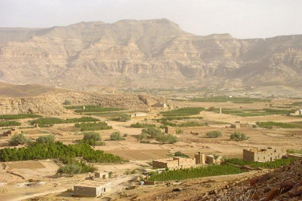 Qat plantations in a valley near San'a | Qat | Yemen