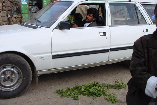Chewing qat produces waste: the branches or leaves that are not good enough | Qat | Yemen