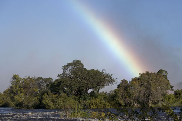 Rainbow over the trees seen from the riverside | Victoria Falls | Zimbabwe